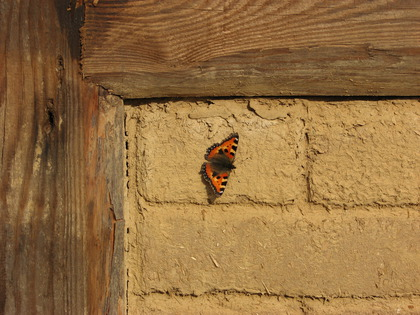 Schmetterling on the Wall